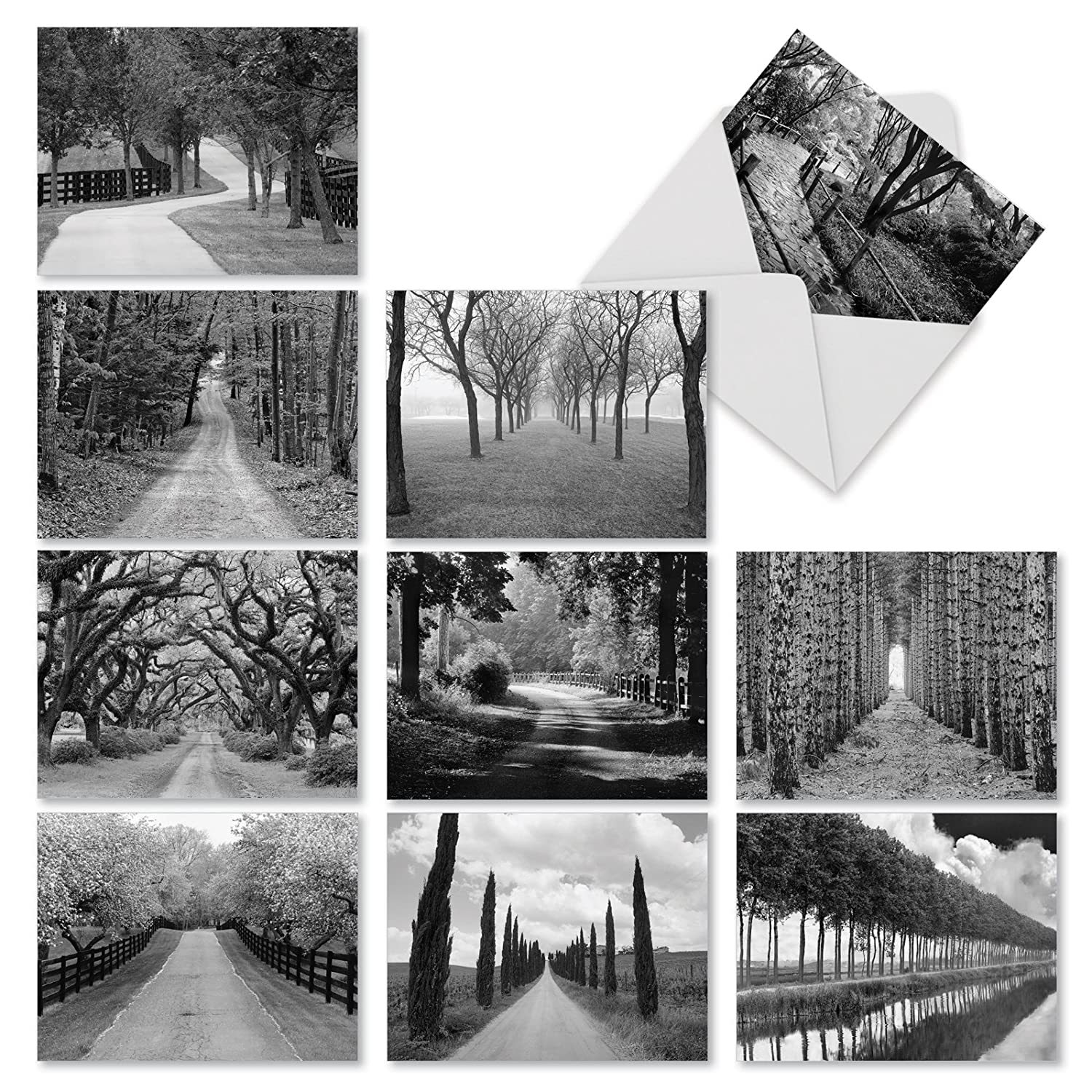 10 beautiful paths and scenery greeting cards 4 x 5 12 inch all occasion blank note set tree lines notecards black and white card photography