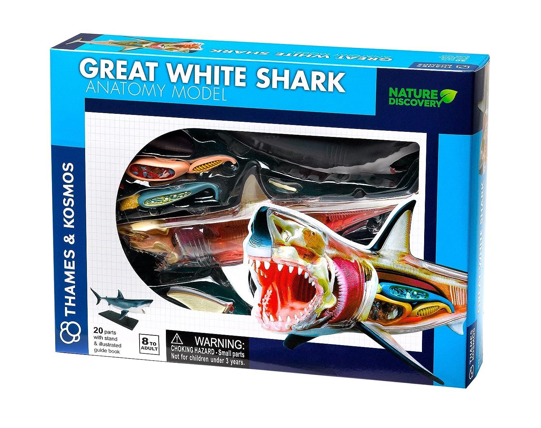 Thames & Kosmos 261110 White Shark Anatomy Model Toy: Thames and ...