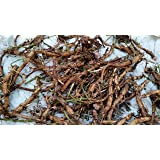 Hop Rhizomes - Brewer's Gold