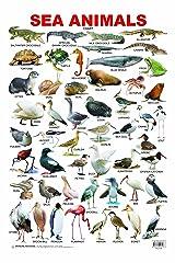 Sea Animal Poster