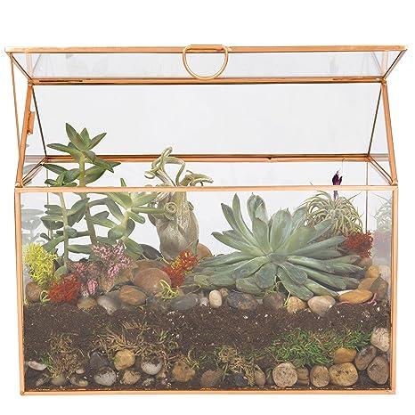 Amazon Com Deco Glass Terrarium Succulent Air Plant Large 9 8 X