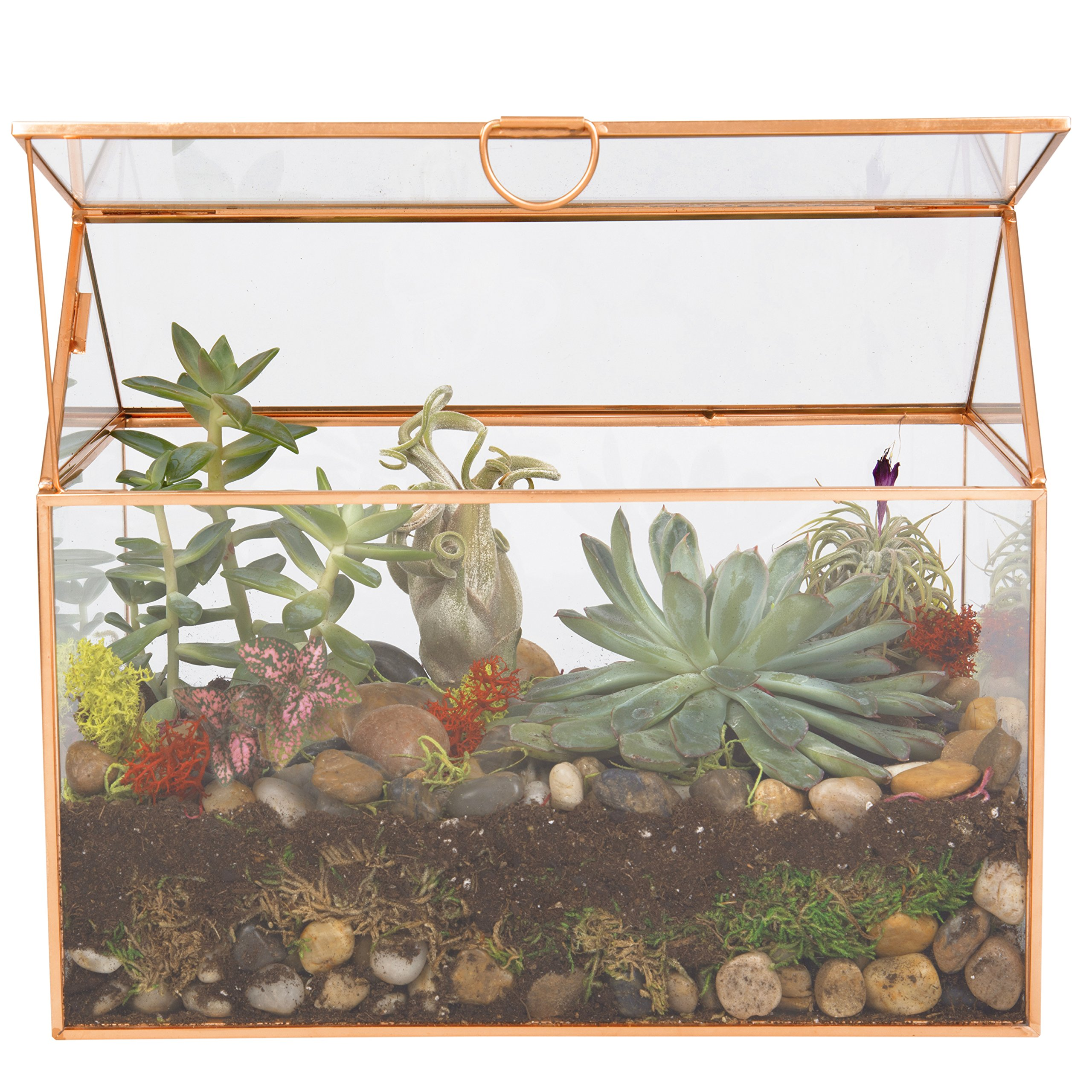Deco Glass Terrarium, Succulent, Air Plant (Large 9.8'' x 6'' x 8'')