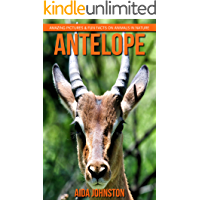 Antelope: Amazing Pictures & Fun Facts on Animals in Nature