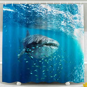 Shorping 78x72 Shower Curtain, Whale Shark Rhincodon typus and his Little Fish Friends Waterproof Decor Bathroom Fabric Polyester Design Set with Hooks