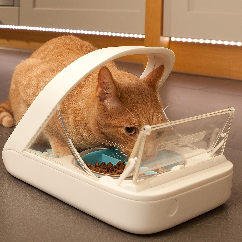 cat behaviour specialist melbourne