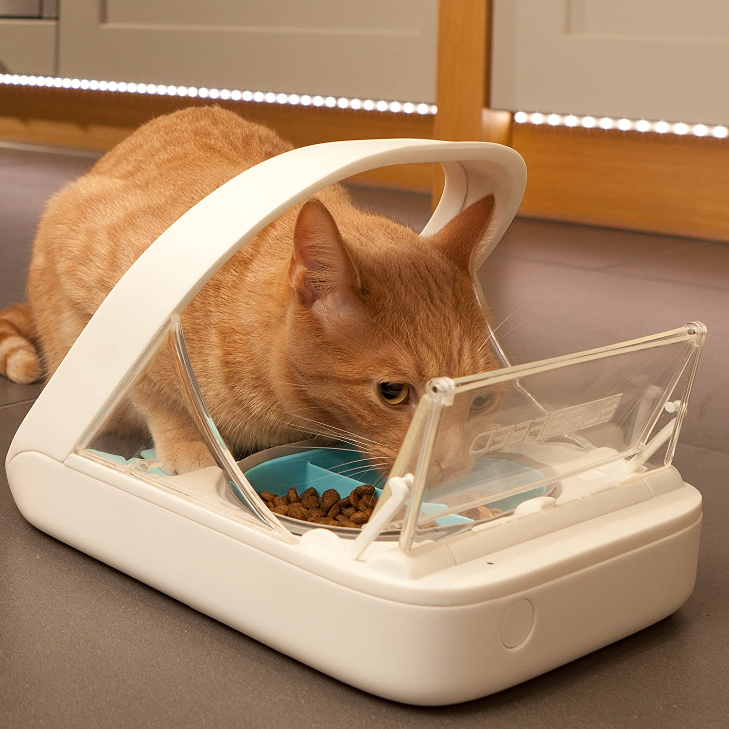 best diet for bengal cats