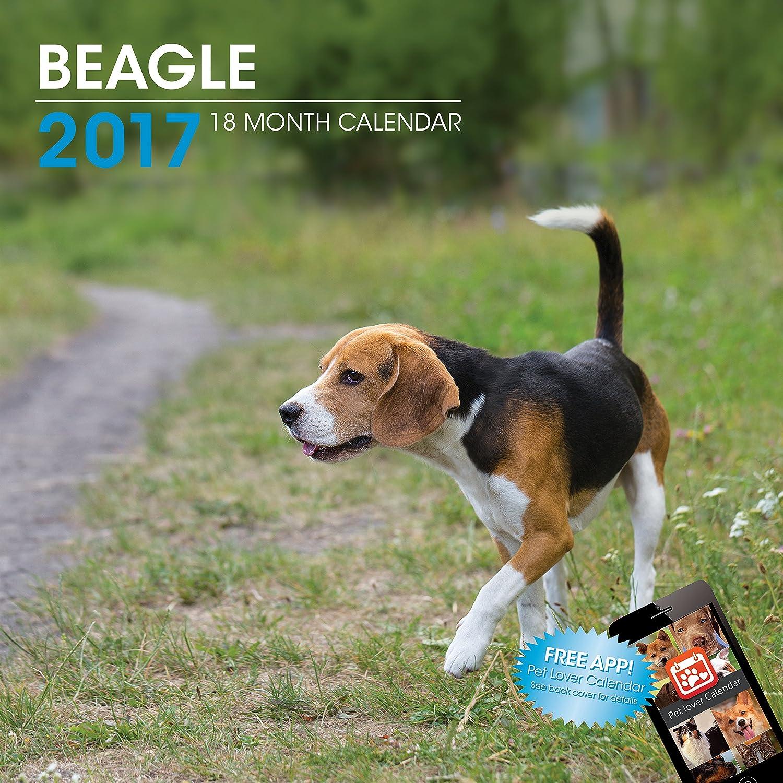 LittleGifts Beagle 2017 Calendar (3028)