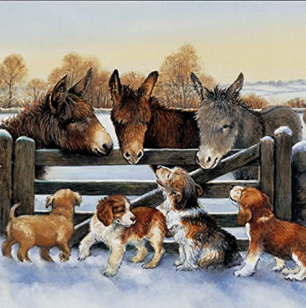 assorted dogs and donkey in the snow animal charity christmas cards pack of 10 large - Animal Charity Christmas Cards