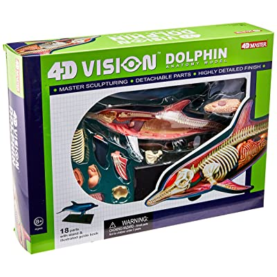 Famemaster 4D-Vision Dolphin Anatomy Model: Toys & Games
