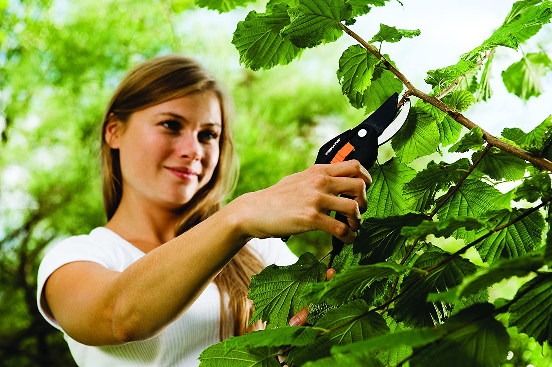 Szeneriebild Gartenschere