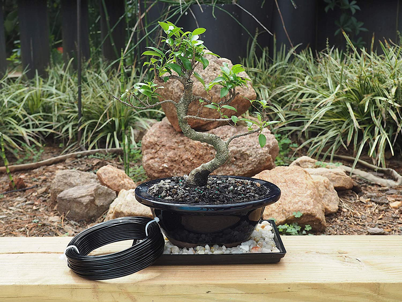 alambre aluminio cobre bonsái