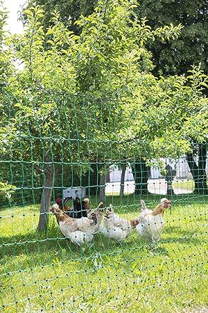 Backyard Poultry Supplies Kerbl Filet Double Pointe Pour Élevage Volaille Vert 50 M X 112 Cm
