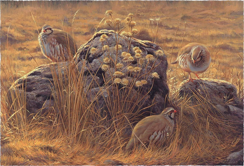 Perdices y cardos - Lámina sobre lienzo. Cuadro de Perdiz roja (Alectoris rufa) 40 x 28 cms. Cuadros de animales, aves, pájaros: Amazon.es: Handmade