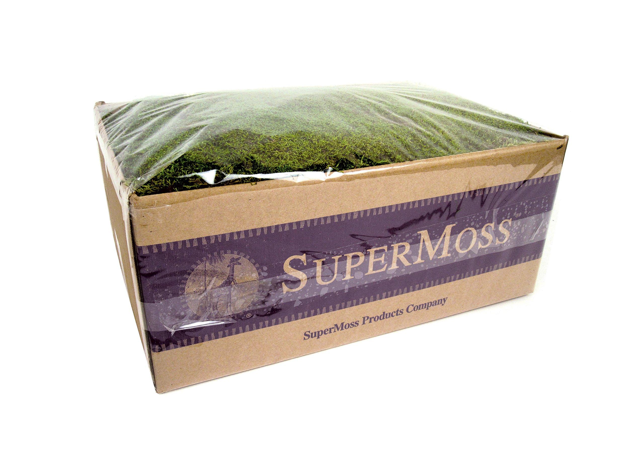 SuperMoss (21598) Sheet Moss Preserved, Fresh Green Wet Use (20-24 sq. ft. Approx 3.5lbs) by Super Moss