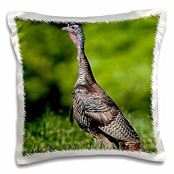 3dRose pc/_92146/_1 North America Montana 16 by 16 Skunk wildlife-US27 TVE0005-Tom Vezo-Pillow Case USA