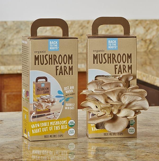 Mushroom-Budding-Kit