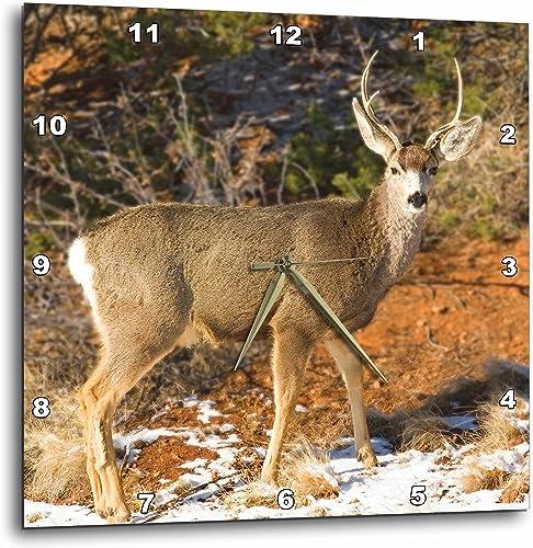 3dRose DPP_119943_2 Mule Deer Staring Wall Clock, 13 by 13-Inch