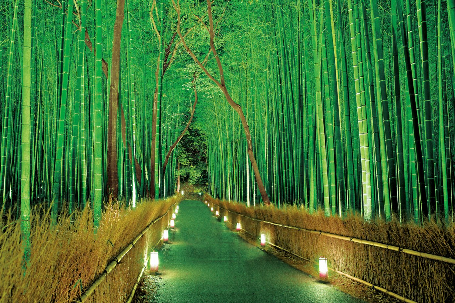 Sagano 23-546 - bamboo forest Lit 2016 piece ultra-light master of the puzzle (japan import)