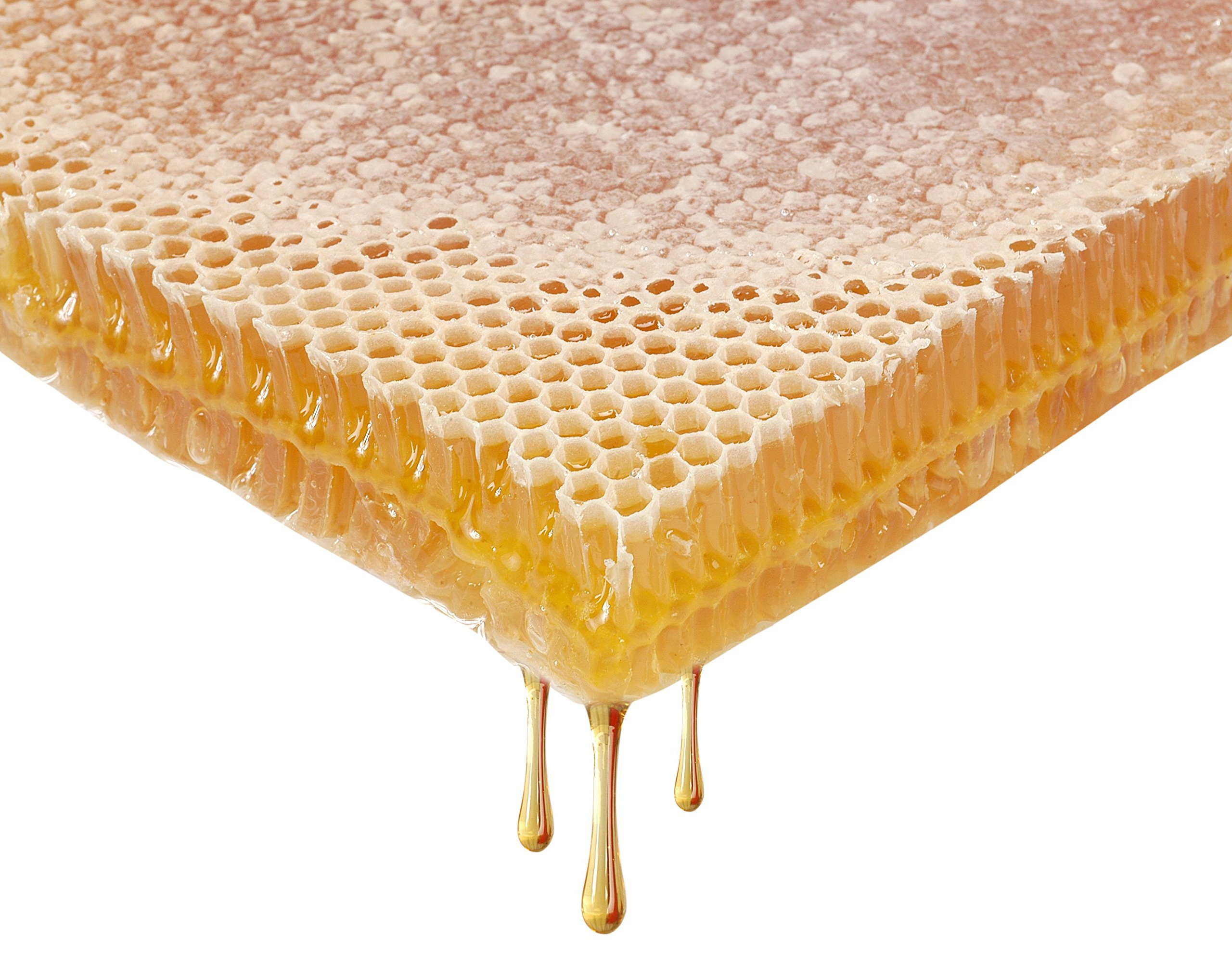 Honey Land Whole Block Sheet of Pure Raw Honey Comb 100% Organic & Unfiltered A Delicious Unique & Fun Dessert 3.5kg 7.7lb by Honeyland