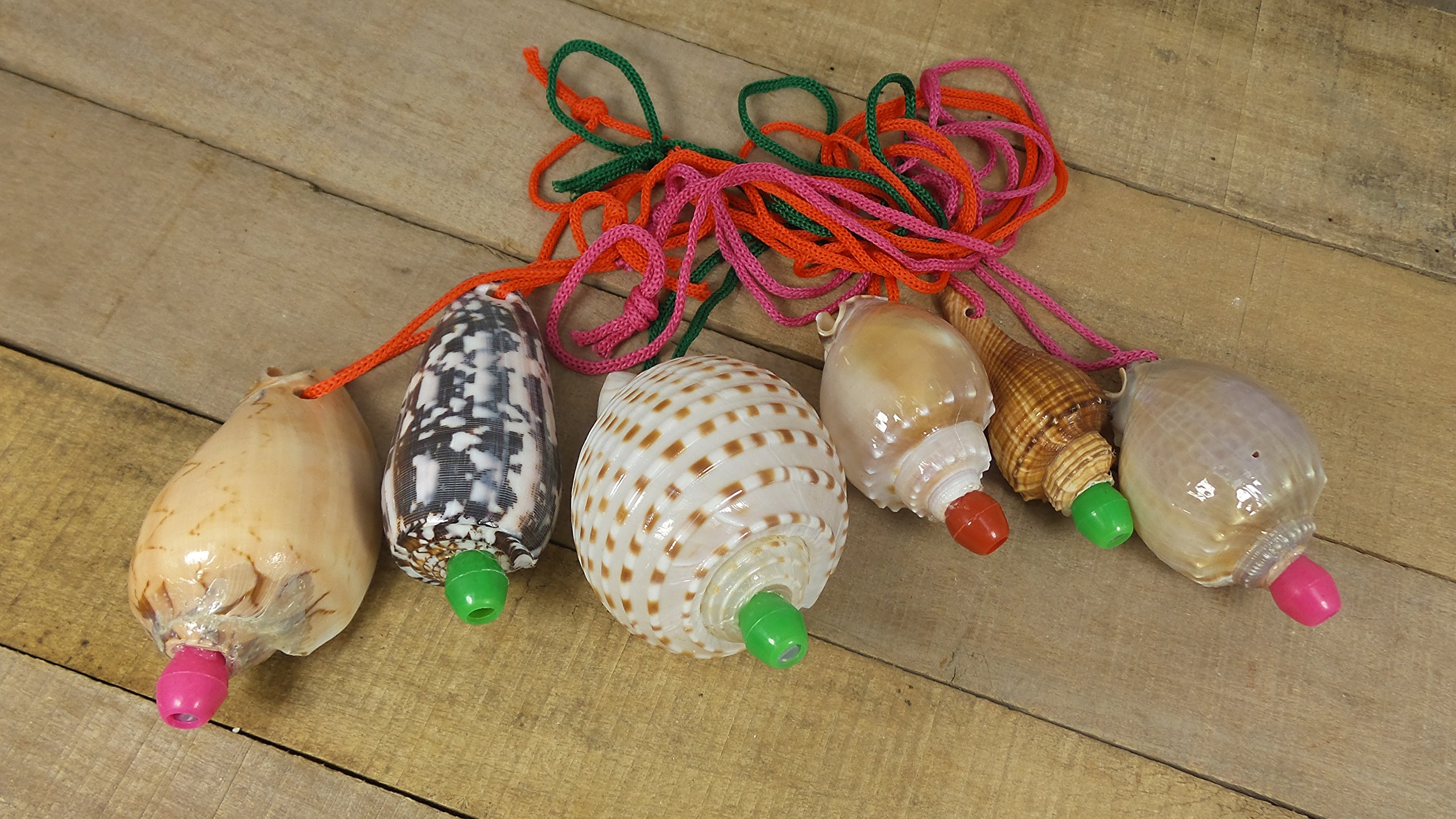 Assorted Seashell Whistles, Set of 12, Party Favors, Conch Horns,