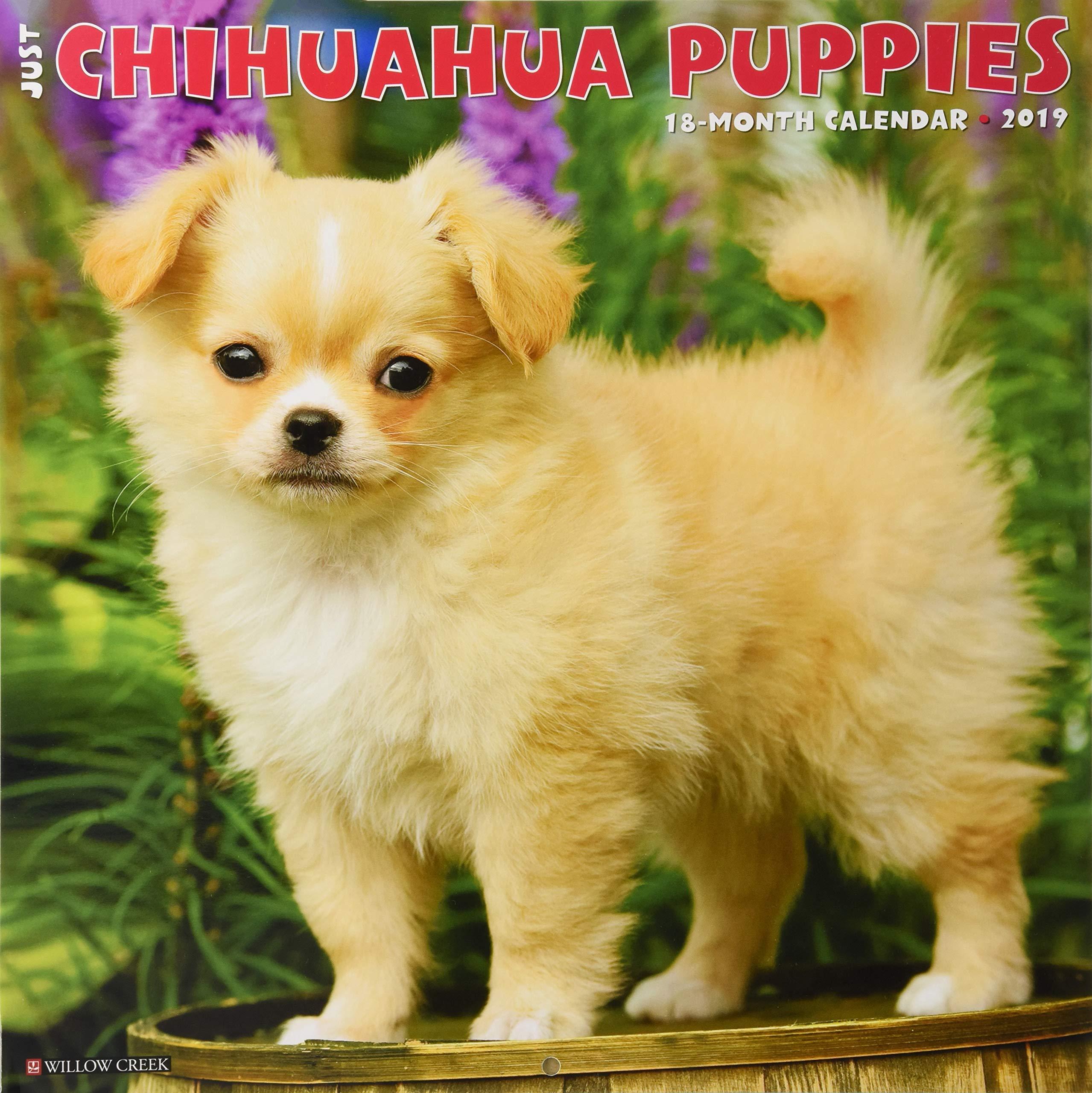 Just Chihuahua Puppies 2019 Wall Calendar (Dog Breed