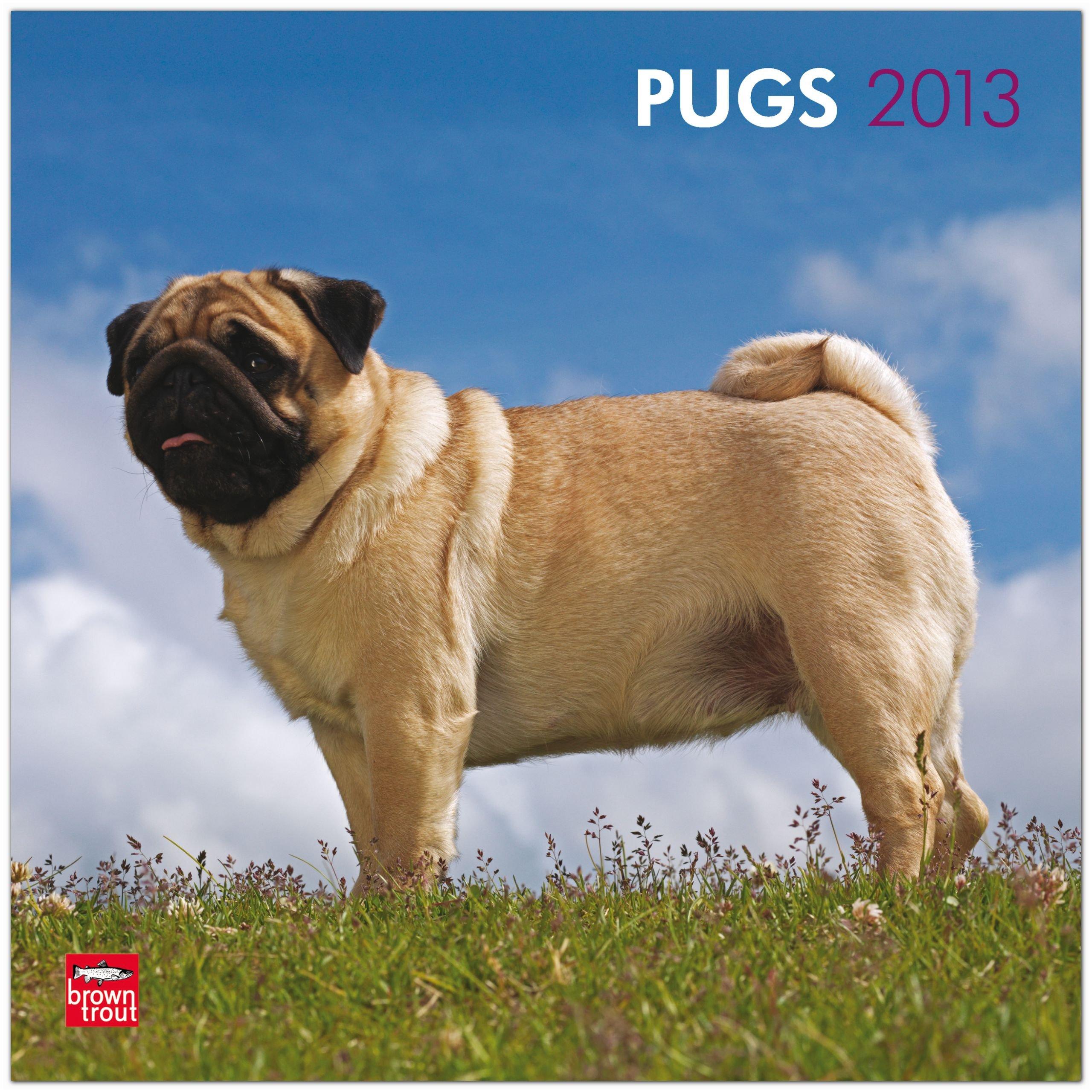 Pugs 2013 - Möpse - Original BrownTrout-Kalender