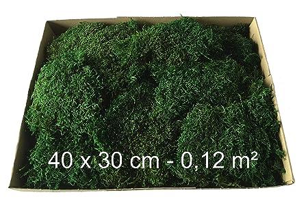 Moosmatten konserviert Deko Moos 1-Lage Flachmoos kaufen haltbar Moosplatten für Dekoration mit Moss, konserviertes Waldmoos