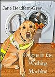 Onions in the Washing Machine