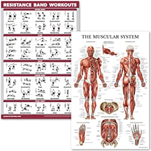 """QuickFit Resistance Bands Workouts and Muscular System Anatomy Poster Set - Laminated 2 Chart Set - Resistance Tube Exercise Routine & Muscle Anatomy Diagram (18"""" x 27"""")"""