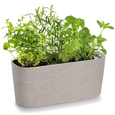 Amazing Creation Windowsill Rectangular Self Watering Herb Garden | Plastic Planter Pot for Herbs, Greens, Flowers, House Plants and Succulents | Indoor/Outdoor Flower Pot (Stone Color) : Garden & Outdoor