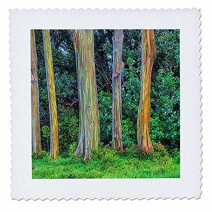 amazon com 3drose danita delimont trees usa hawaii maui