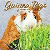 Magnet & Steel Guinea Pig Traditional 2020 Calendar