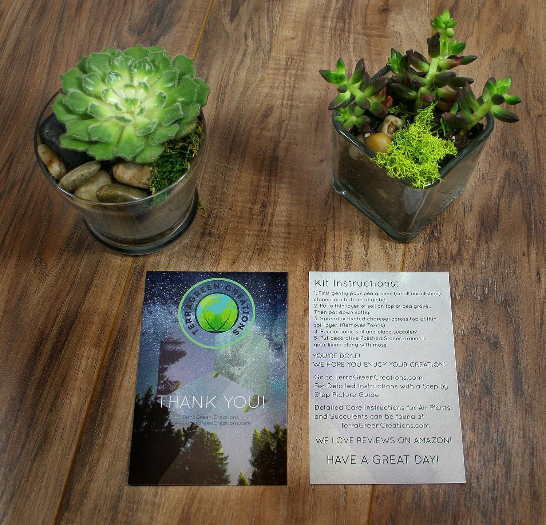 Amazon Com Complete Terrarium Kit Succulent Planter With Soil And