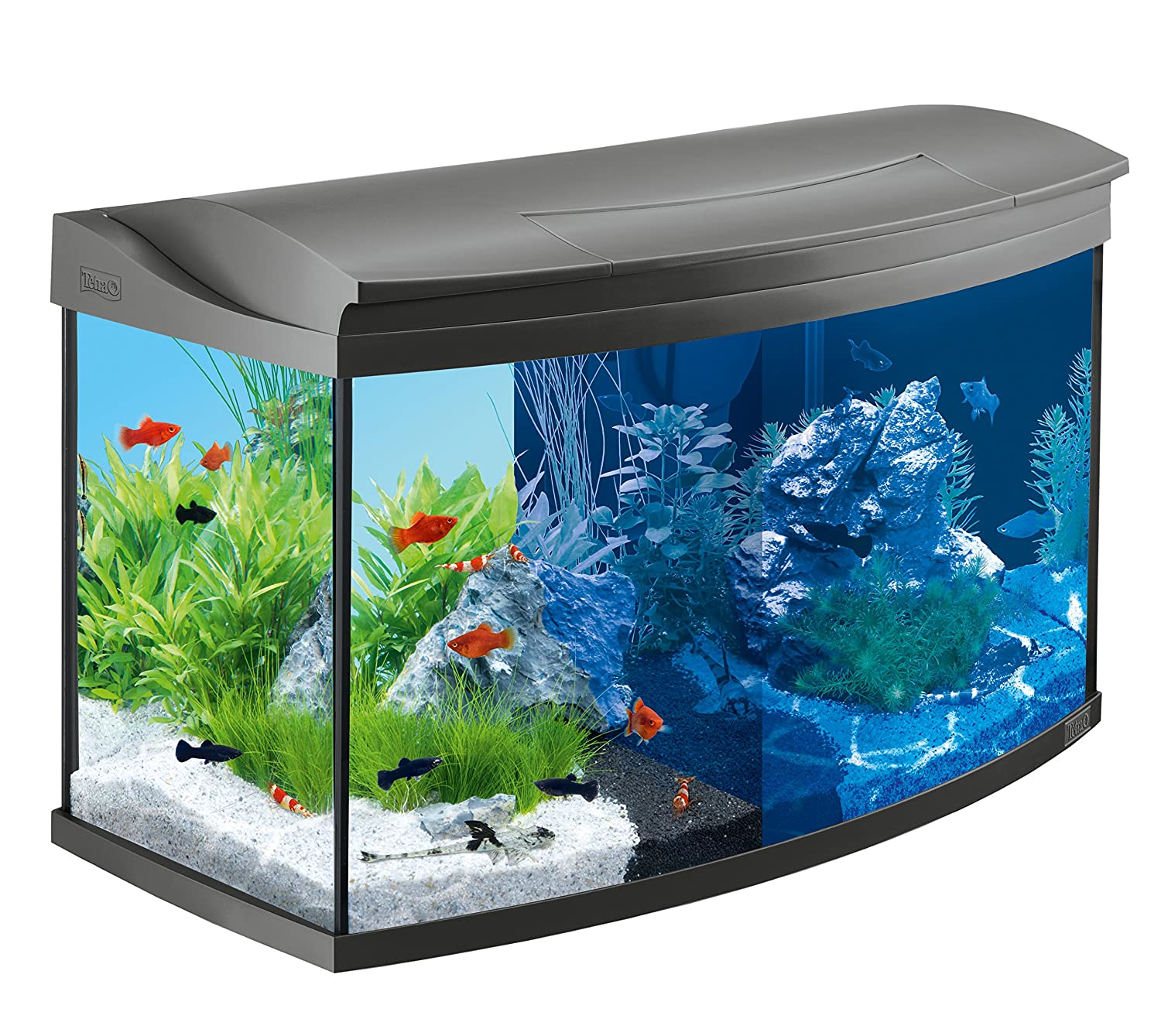 tetra aquaart discovery line led aquarium komplett set inklusive led beleuchtung tag und. Black Bedroom Furniture Sets. Home Design Ideas