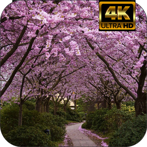 Sakura Blossom Wallpapers Amazones Appstore Para Android