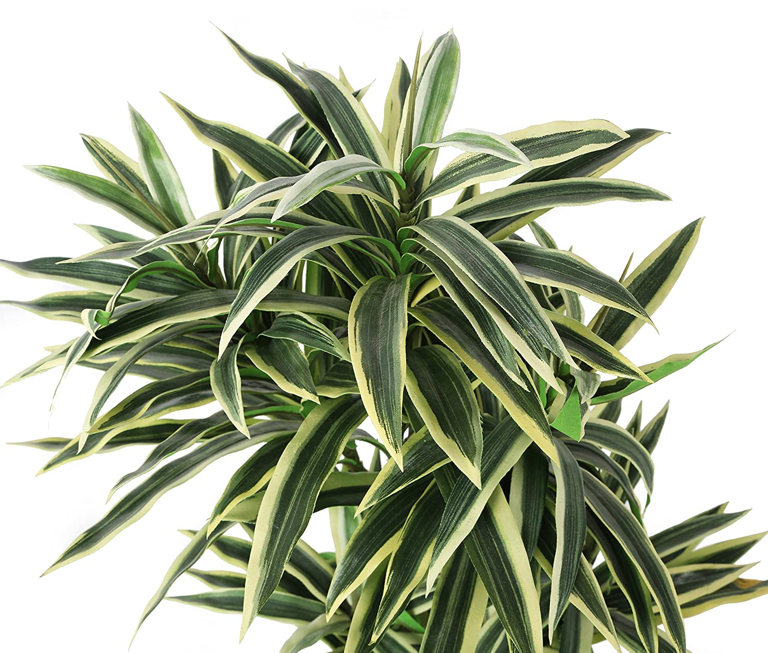 Closer2nature Artificial 2ft Variegated Green And White Dragon Tree