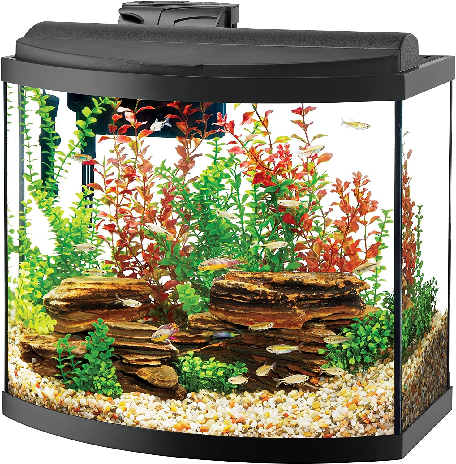 Aqueon Deluxe LED Bow front Aquarium Kit