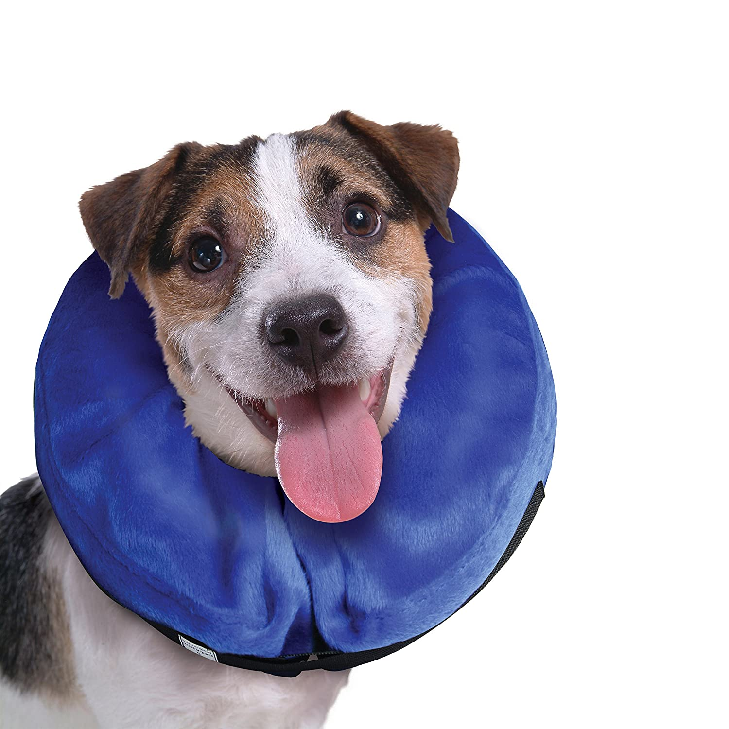 Amazoncom KONG Cloud ECollar For Cats And Dogs Small Pet - Dog portrait photography shows how they hate wearing the cone of shame