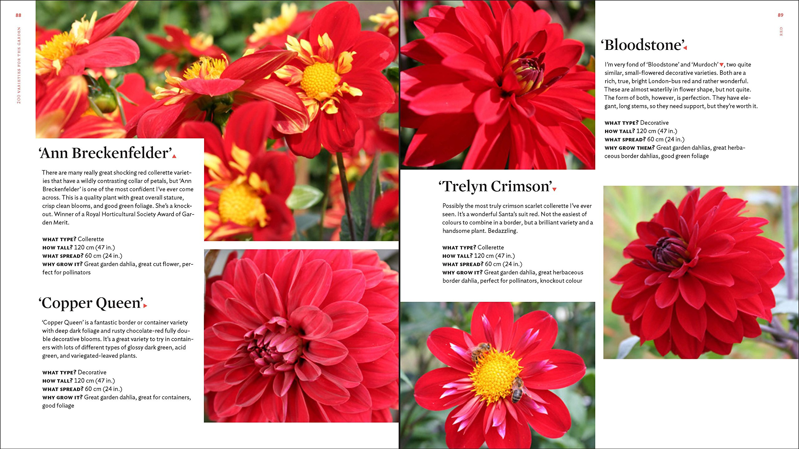The Plant Lovers Guide To Dahlias The Plant Lovers Guides Andy