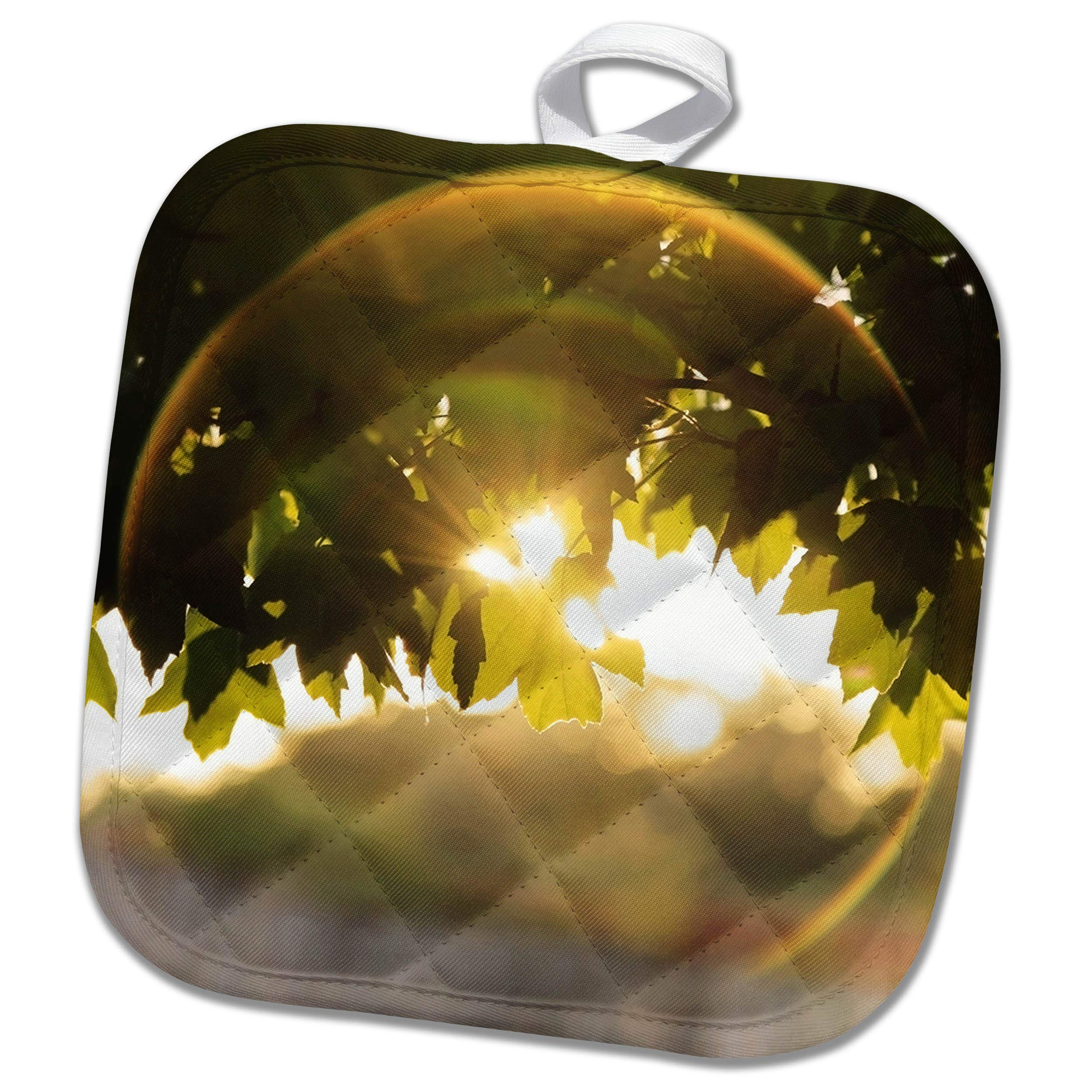 3dRose Stamp City - Nature - Photograph of a suolar Lens Flare Through The Maple Leaves. - 8x8 Potholder (PHL_291312_1)