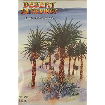 Date Palm Seeds – Plant Your Own – Contains Aprox 6 Seeds – Grow Your Own Garden – Tree – History and Planting Instructions : Garden & Outdoor