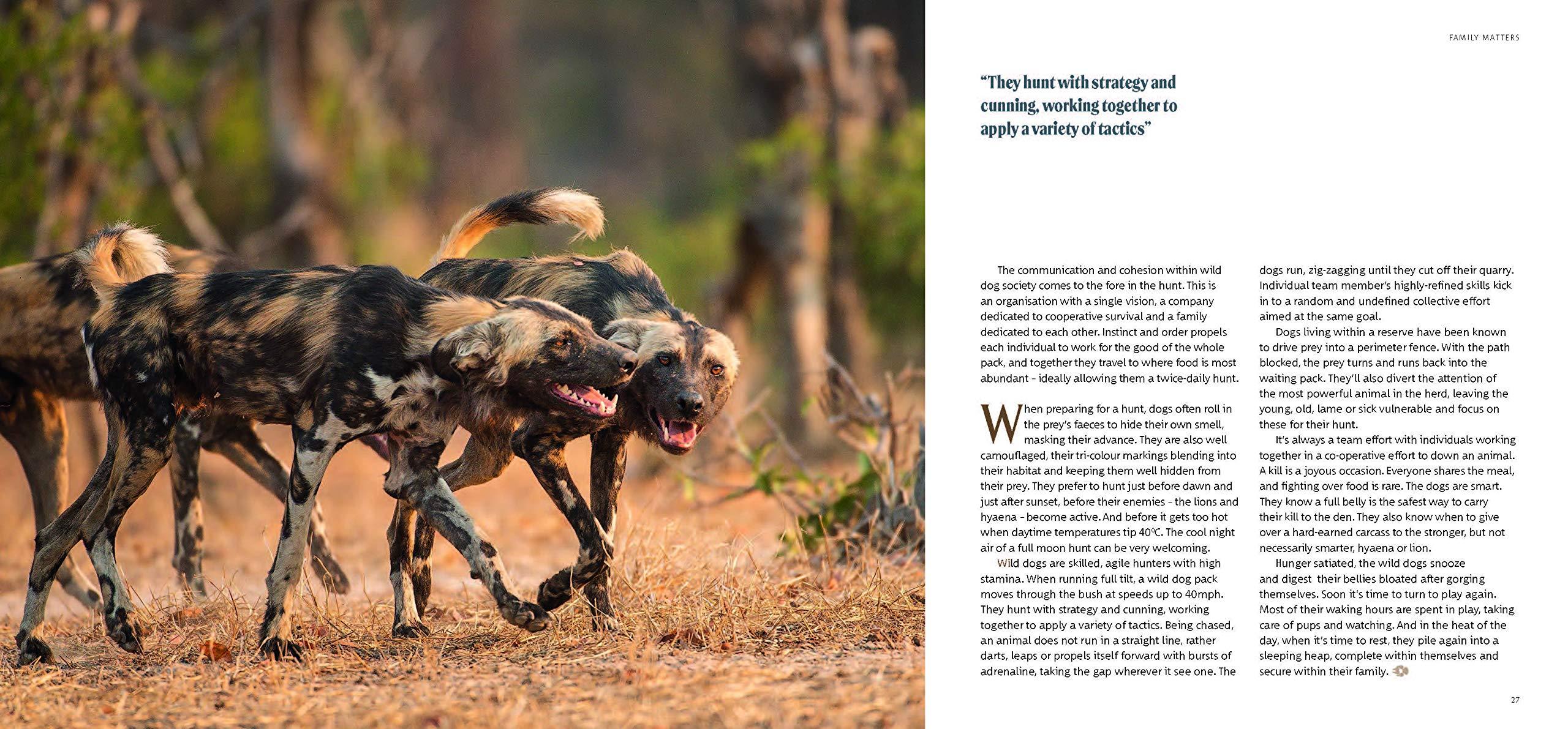 Africa S Wild Dogs A Survival Story Kagan Jocelin 9781913159191 Amazon Com Books
