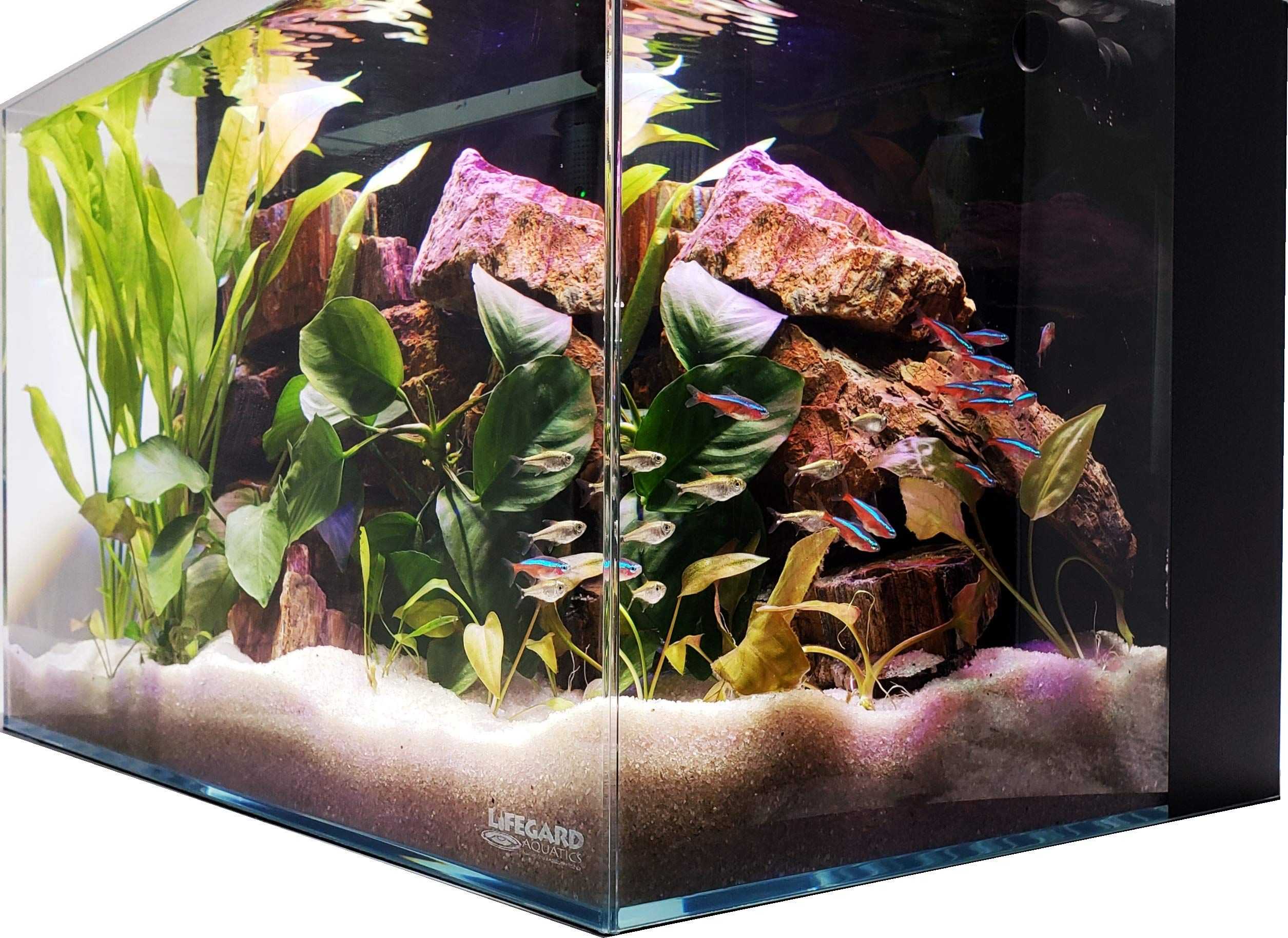 Lifegard Aquatics Ultra Low Iron Crystal Aquarium with Back Filter 45° Beveled Edge Rimless 9.98 Gallons, Clear by Lifegard Aquatics