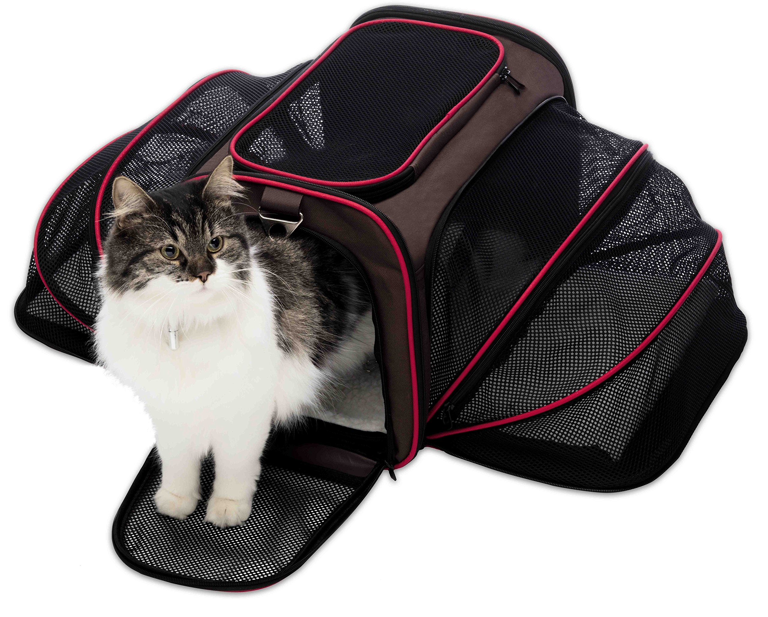 Petyella Cat Carrier Pet Carrier for Small Dogs and Cats Expandable Soft Sided Crate for Pet - Airline Approved Medium Kennel Travel Bag - 2.8 lbs Dog Carriers with Bonus Blanket and Bowl,Dark Brown by Petyella (Image #10)