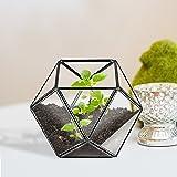 Modern Design Clear Glass & Black Metal Frame Small Faceted Plant Terrarium / Decorative Centerpiece Bowl