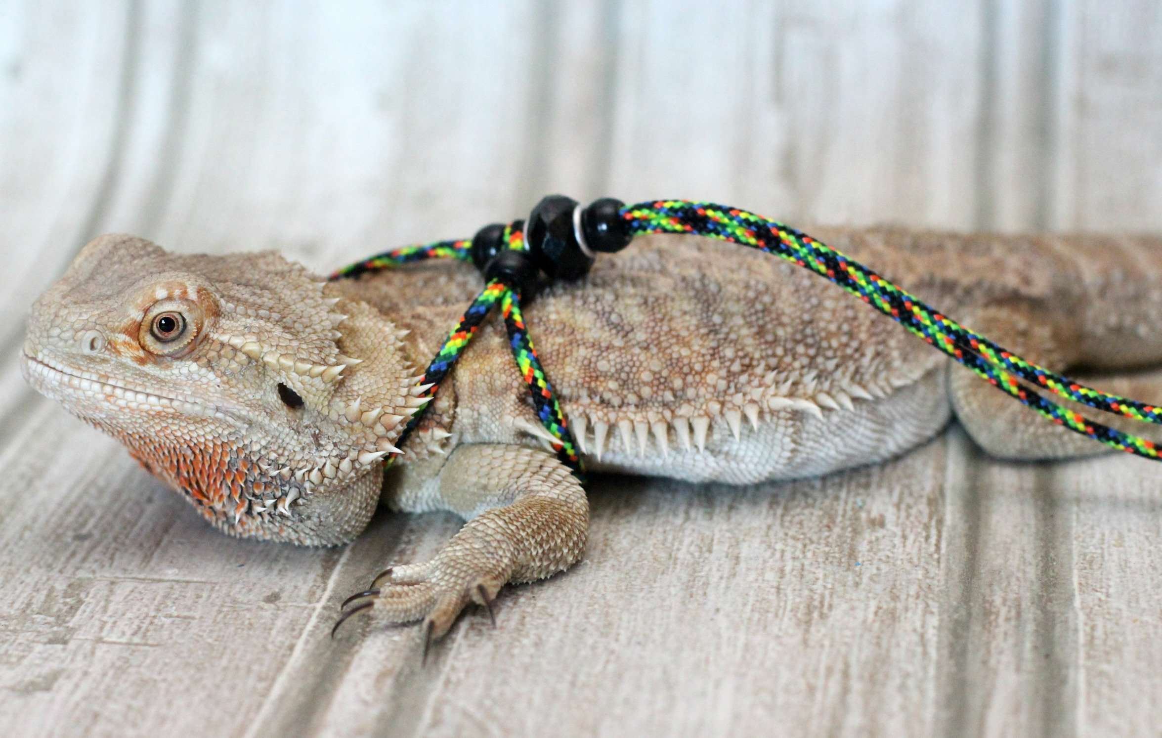 Adjustable Reptile Leash™ Harness Great for Reptiles or Small Pets 100% Adjustable One Size Fits Most (6 Feet, Multi)