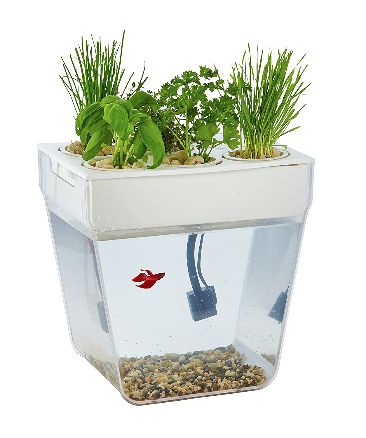 Herb Kitchen Garden Kit Amazoncom Back To The Roots Water Garden Amazon Launchpad