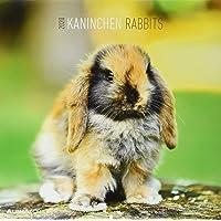 Kaninchen 2020 - Rabbits - Wandkalender - Broschürenkalender (30 x 60 geöffnet) - Tierkalender - Wandplaner