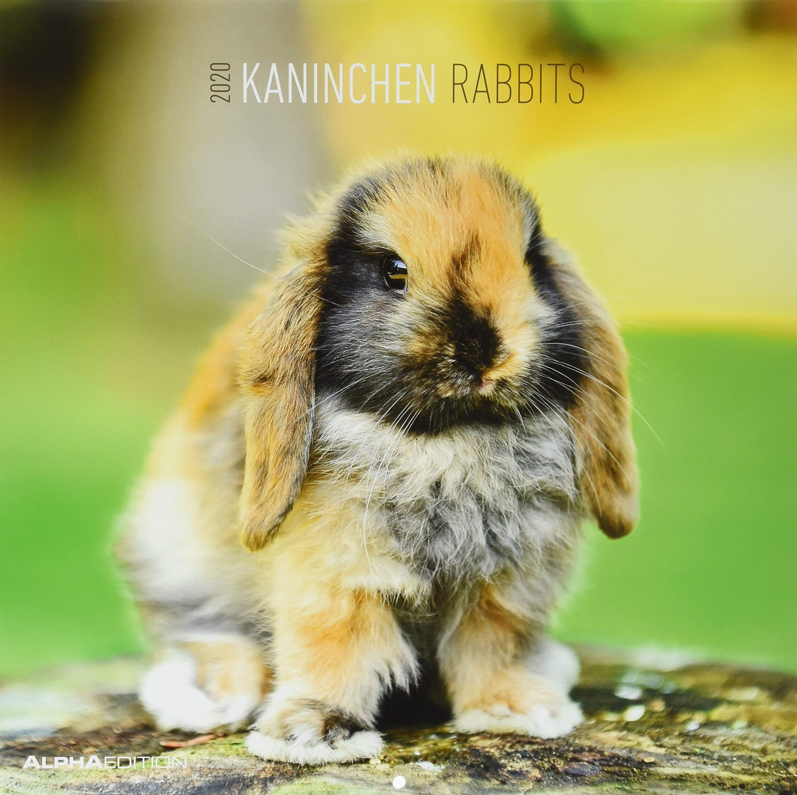 Kaninchen 2020   Rabbits   Wandkalender   Broschürenkalender  30 X 60 Geöffnet    Tierkalender   Wandplaner