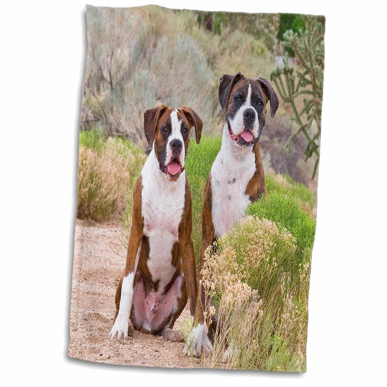 3D Rose Boxer Dogs-Desert Park in New Mexico-Us32 Zmu0013-Zandria Muench Beraldo Hand//Sports Towel 15 x 22